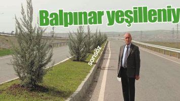 BALPINAR YEŞİLLENİYOR