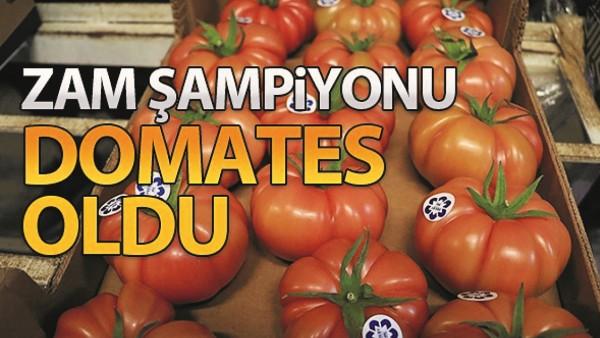 ZAM ŞAMPİYONU DOMATES